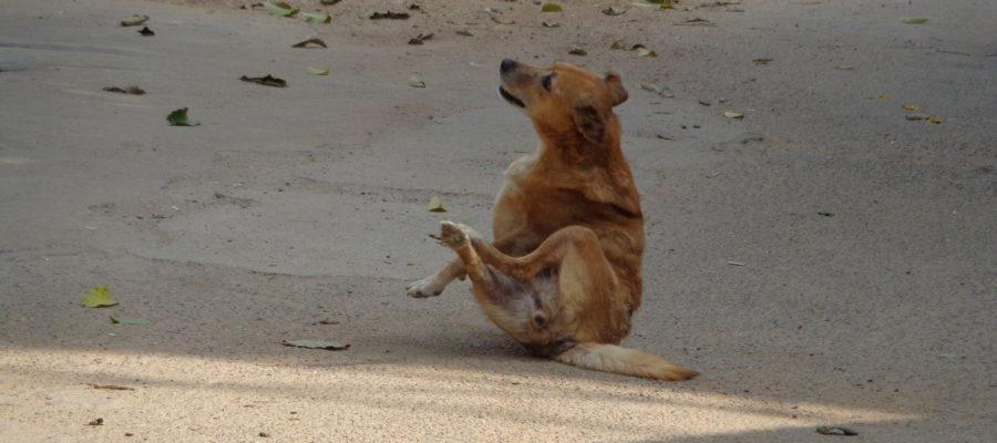 EFFECTIVE DOG FLEA TREATMENT METHOD