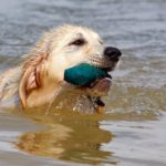 BEST INTERACTIVE TOYS FOR LABRADOR RETRIEVERS