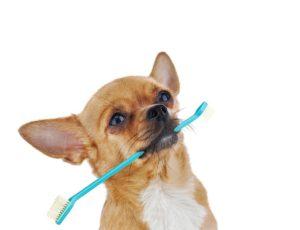 dog teeth care