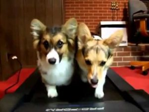 why is exercising important for your dog
