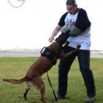 Dog Dazer II Ultrasonic Dog Deterrent