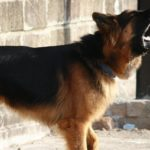 Top 10 Ways To Prevent Dog From Barking