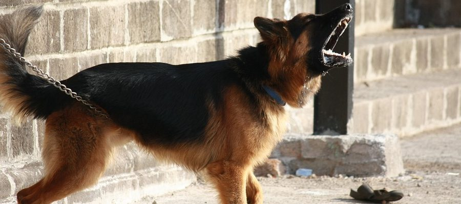 Prevent Dog From Barking
