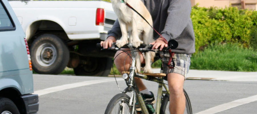 Walky Dog Plus Bike Leash