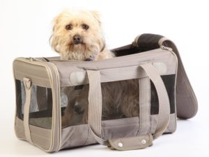 Airline Approved Carrier