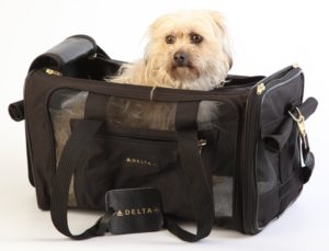 Airline Approved Dog Carrier In Cabin