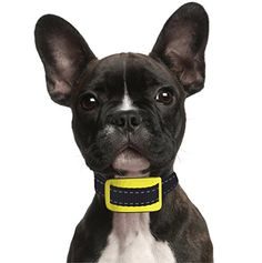 Bark Collars Safe For Small Dogs