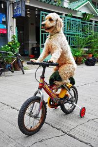 walky dog plus bike leash