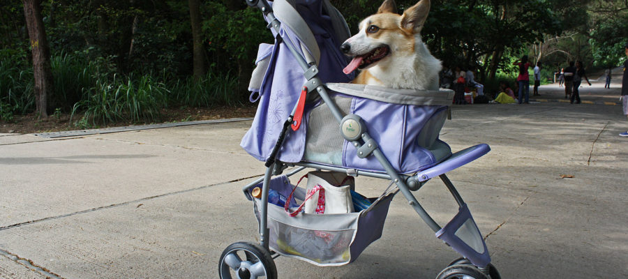 Dog Stroller For Large Dogs Reviewed