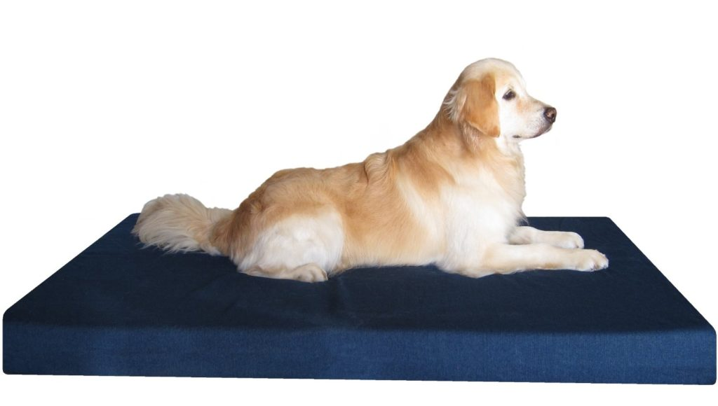 Best Dog Beds For Great Danes Reviews