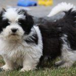 Dog Grooming Tools For Shih Tzu
