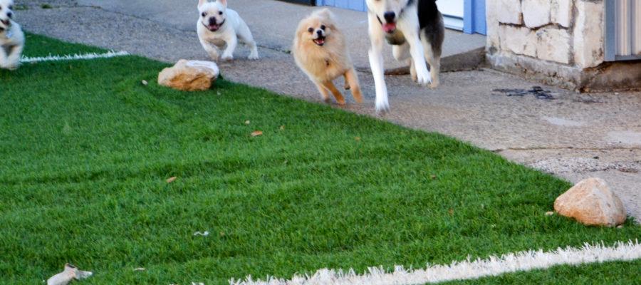Outdoor Dog Mat