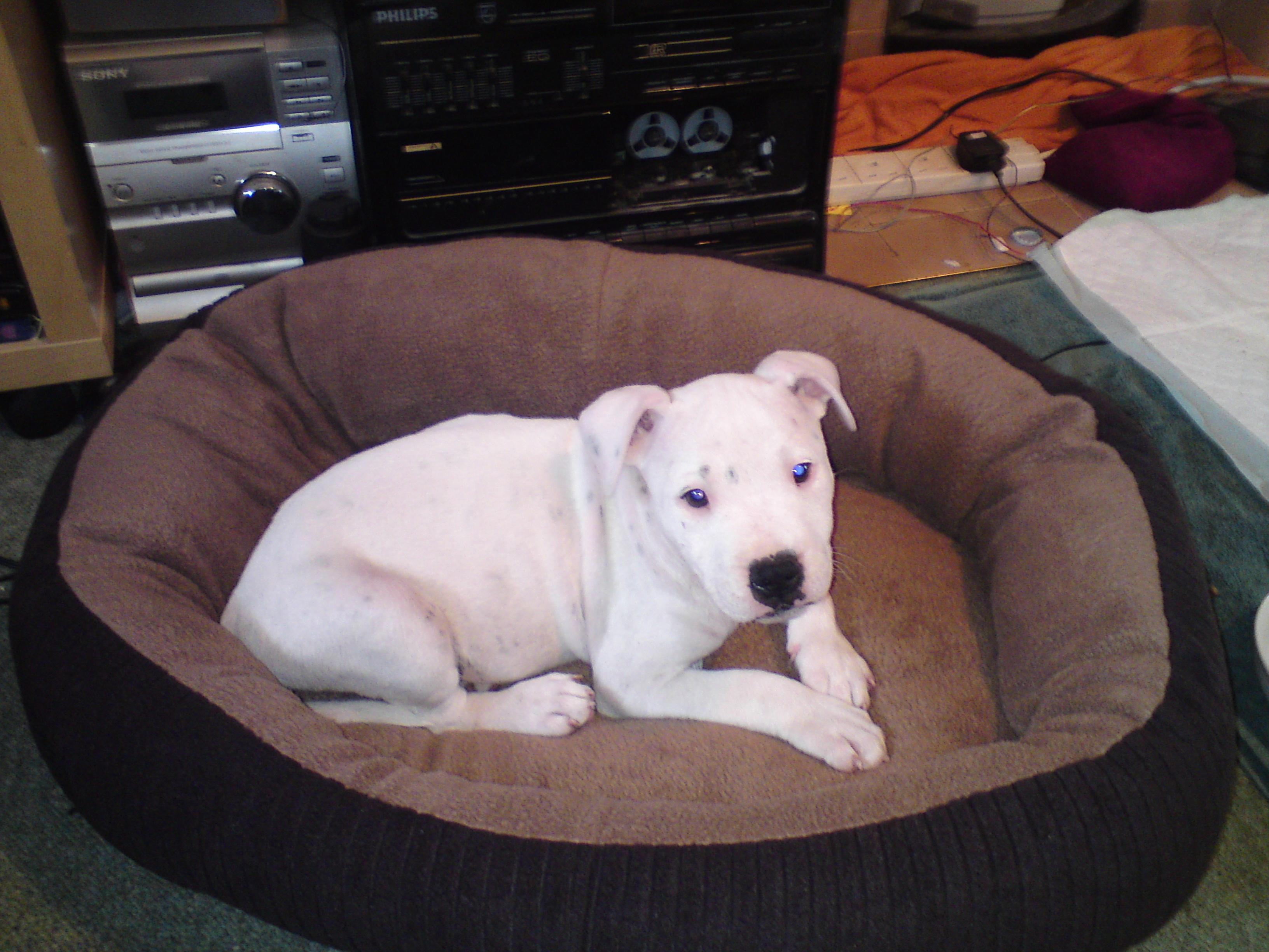 Machine Washable Dog Bed Dog N Treats