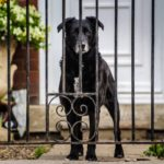 Puppy Gate: Best Swinging Pet Gate