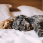 Choosing The Best Donut Dog Bed