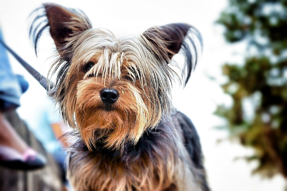 Top 5 Dog Breeds That Barks The Loudest