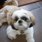 Top 2 Dog Muzzle For Shih Tzu To Prevent Biting