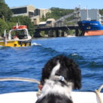 Top 3 Dog Ladders For Boats