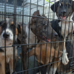 Buying Stackable Dog Crates For Multiple Dogs