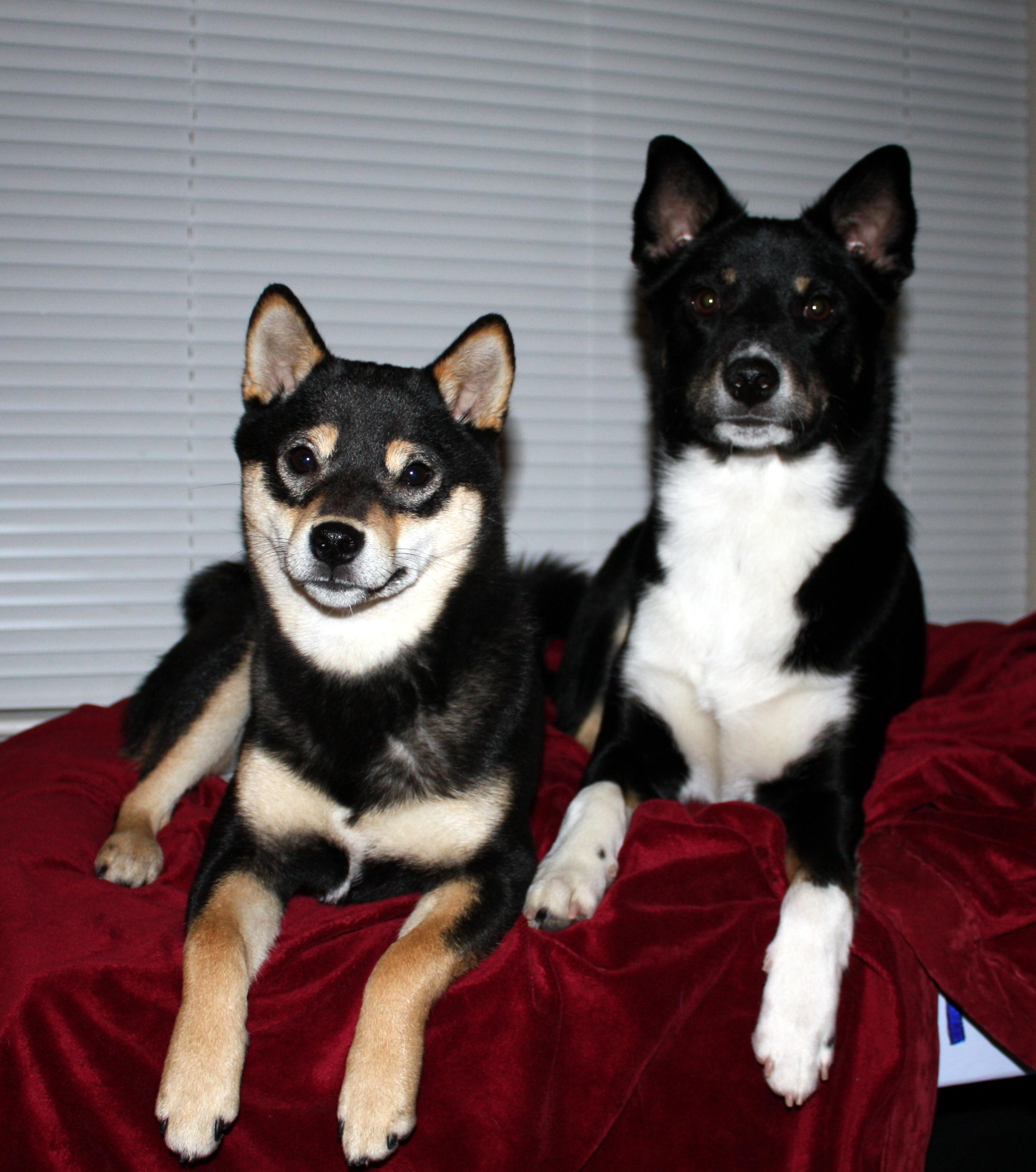 Top 3 German Shepherd Dog Bed Reviews Dog N Treats
