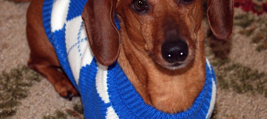 Dog Sweaters For Pitbulls