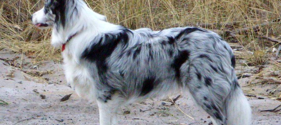 Training Collar For Deaf Dog