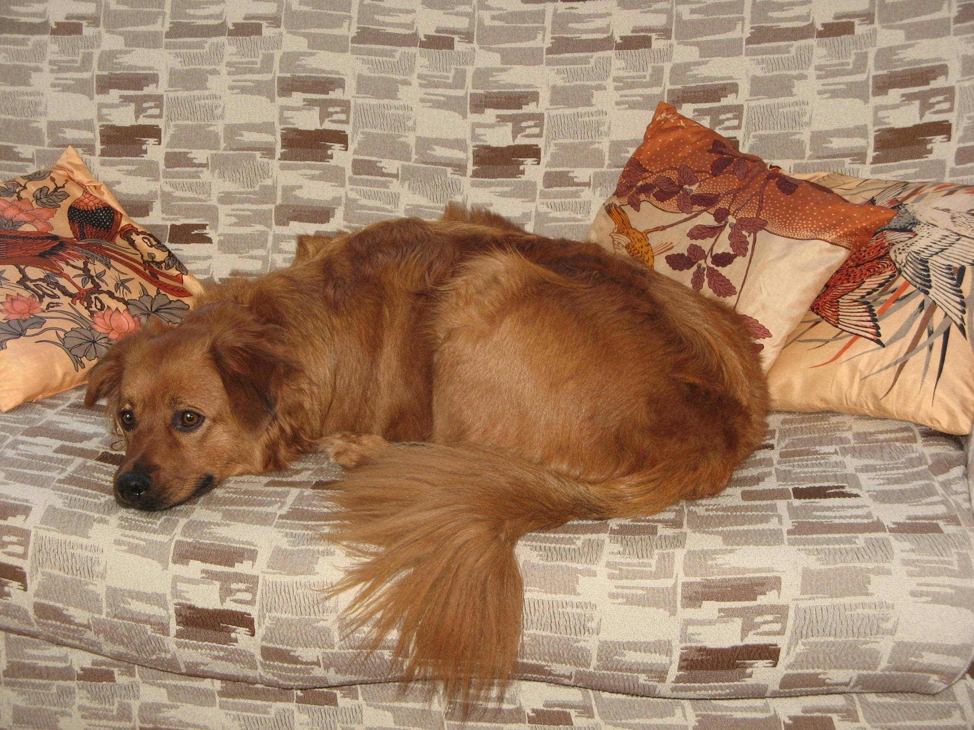Top 5 Best Sofa For Dogs Reviews