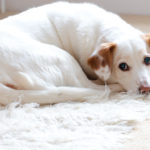 How To Choose The Best Rug For Dogs