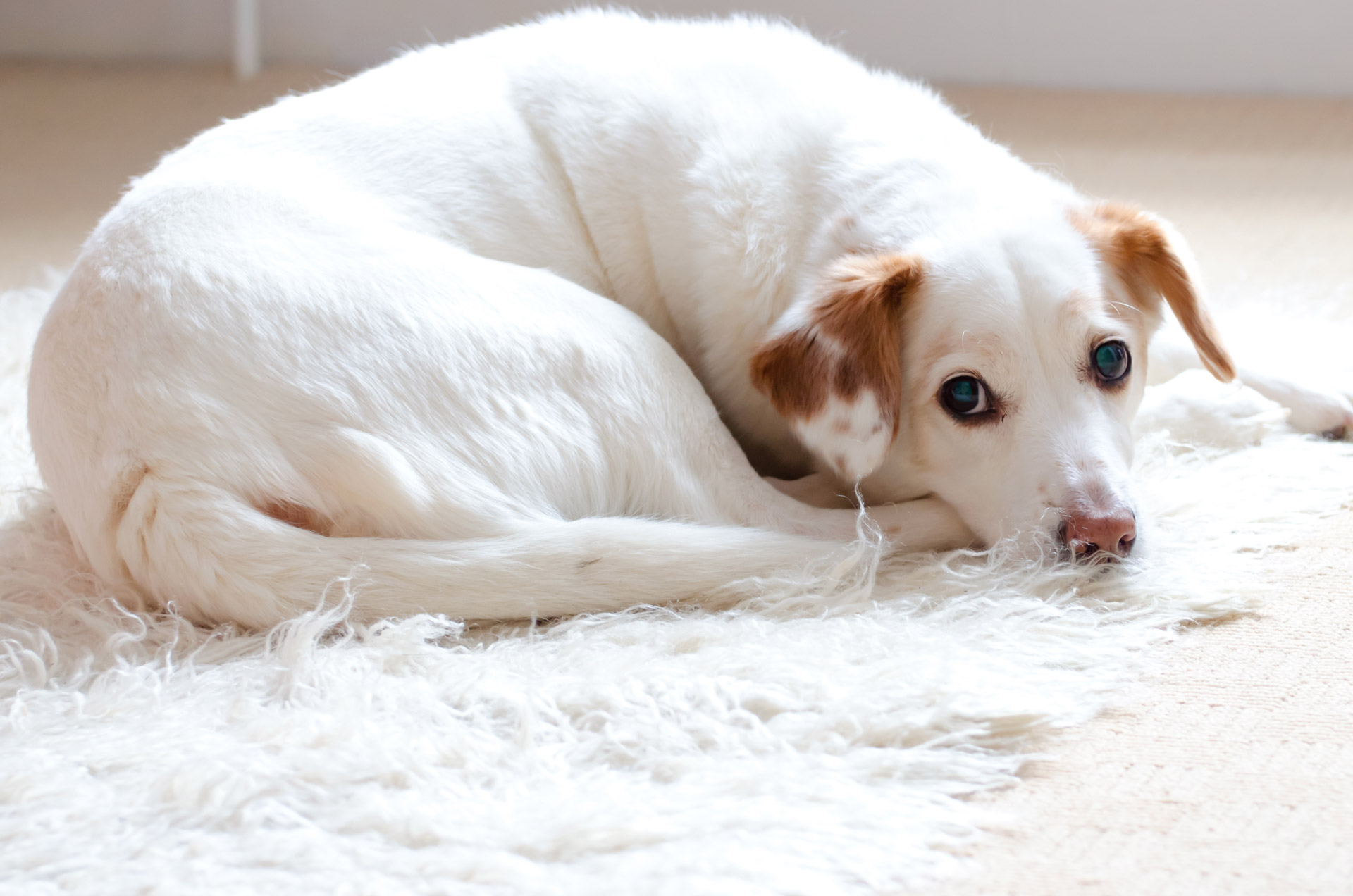 how to choose the best rug for dogs dog n treats