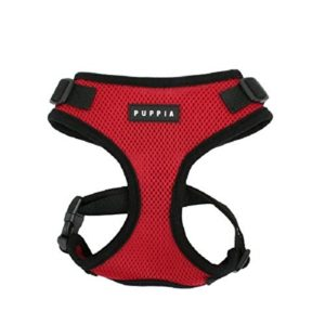 Best Harness For Pugs