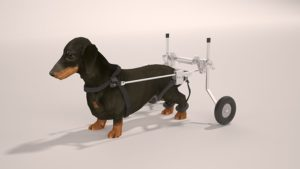 Best Wheelchair For Your Disabled Dachshund