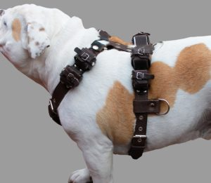 Weight Pulling Harness For Pitbulls
