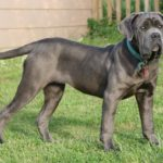 Top 3 Best Extra Large Dog Beds For Mastiffs