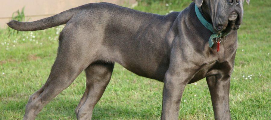 Extra Large Dog Beds For Mastiffs