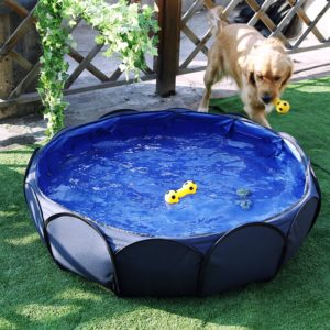 Indoor Pool For Dogs