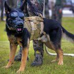 Top 5 Dog Muzzle For German Shepherd