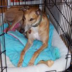 How To Make Dog Crate More Comfortable