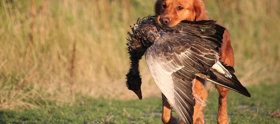 Best Training Collars For Hunting Dogs