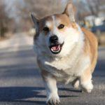Best Bark Collar For Corgi Reviews