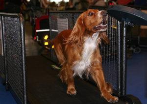How Long Should My Dog Run On The Treadmill