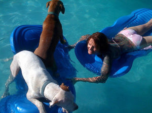 Do Pitbulls Like To Swim?