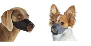 Best Muzzle For Chihuahua