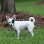 Best Bark Collar For 5lb Dog