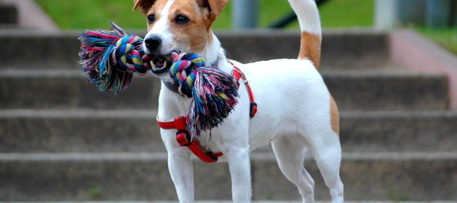 Dog Crates For Jack Russell Terriers