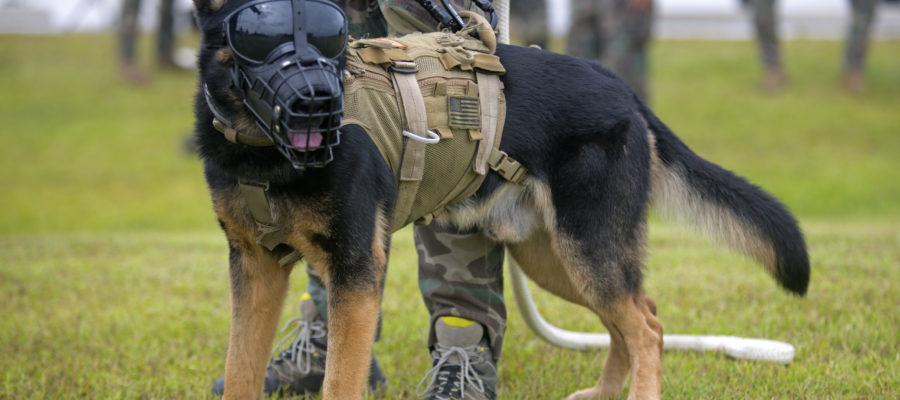 Best Training Collar For German Shepherd