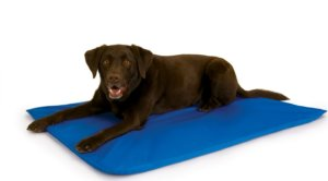 Cooling Dog Bed For Husky To Keep Them Comfortable