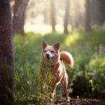 A Comprehensive SureFlap Microchip Pet Door Review