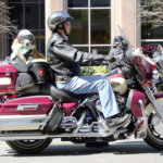 Ride The Motorcycle With The Top 5 Motorcycle Dog Seat