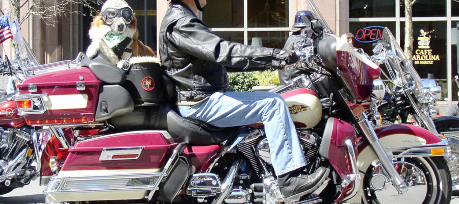 Top 5 Motorcycle Dog carrier