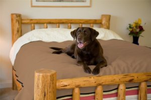 Best Dog House Bedding For Cold Weather